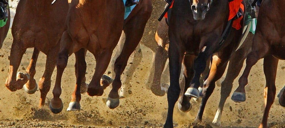 競馬は生き物