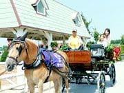 馬と触れ合い乗ることもできる楽しいイベント