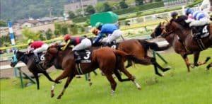 【2020年版】夏競馬っていつから始まるの?日程をご紹介