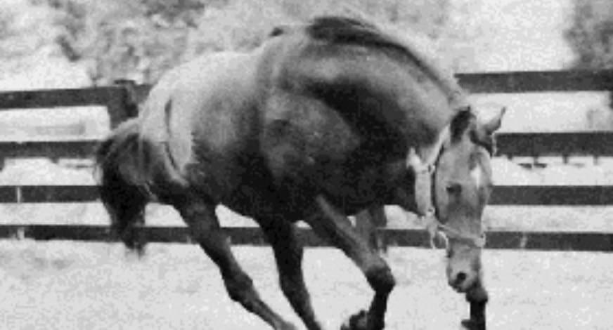 競馬の血統 ナスルーラ