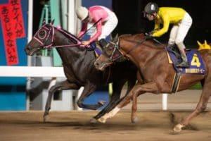 南関東4競馬を予想するために活用できる6つのサイトを紹介!