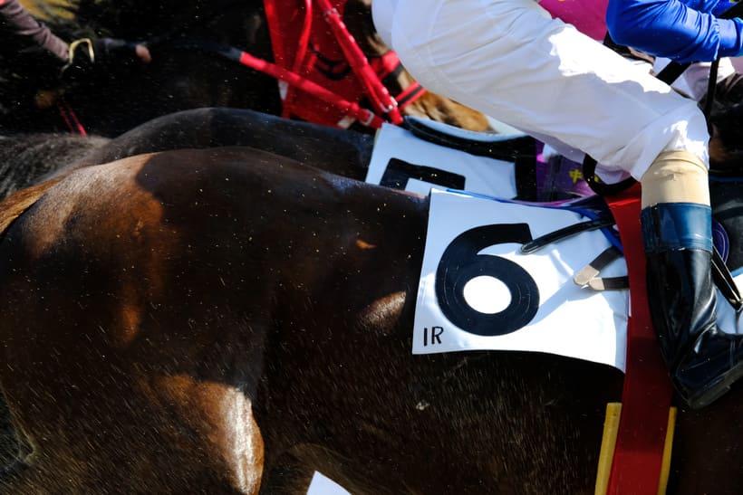 競馬 予想 馬体