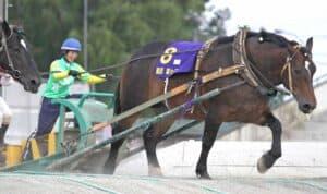 ばんえい競馬は虐待に見える?かわいそうと言われる3つの理由